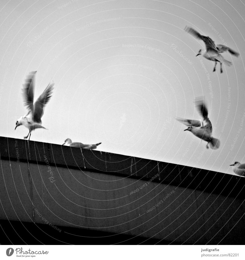 birds Bird droppings Midland Canal Seagull Black-headed gull  Clouds Swing Hannover Poultry Judder Environment Ornithology Bridge pier Freedom