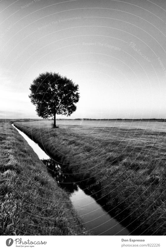 In the surrounding area Environment Nature Landscape Plant Cloudless sky Tree Meadow Field Village Deserted Calm Road ditch Agriculture Black & white photo