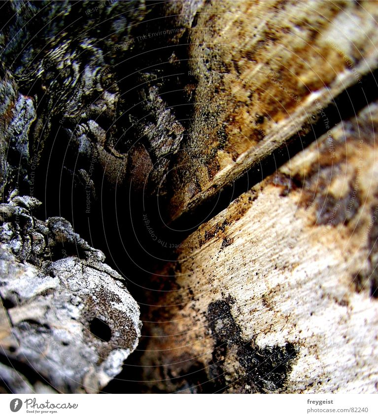 Tree Black Gray Brown Perspective Tree trunk Tree bark Coniferous forest Glade Tree structure