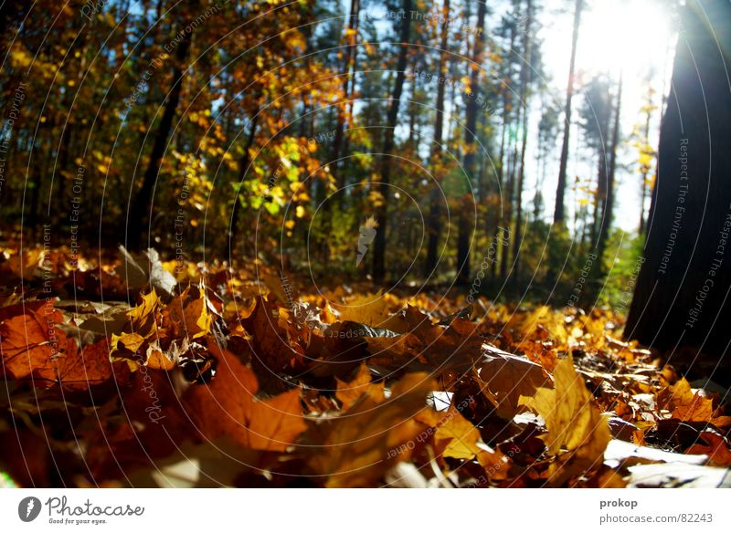 rich and poor Idyll Forest Autumn Leaf Tree Tree trunk Back-light Environment Woodground Bushes Cold Physics Beautiful Undergrowth Fresh Tasty Tree structure