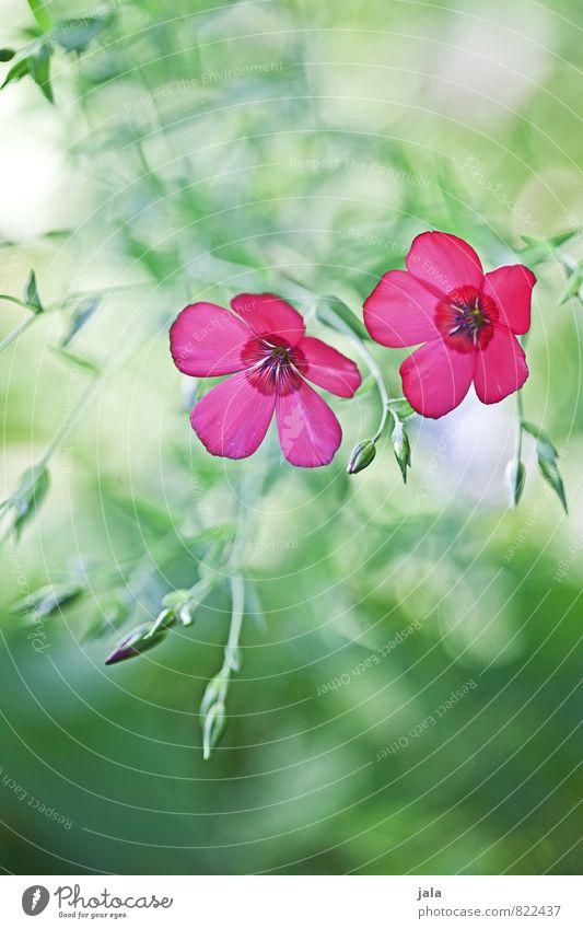 Nature Plant Beautiful Summer Flower Leaf Environment Blossom Meadow Garden Esthetic