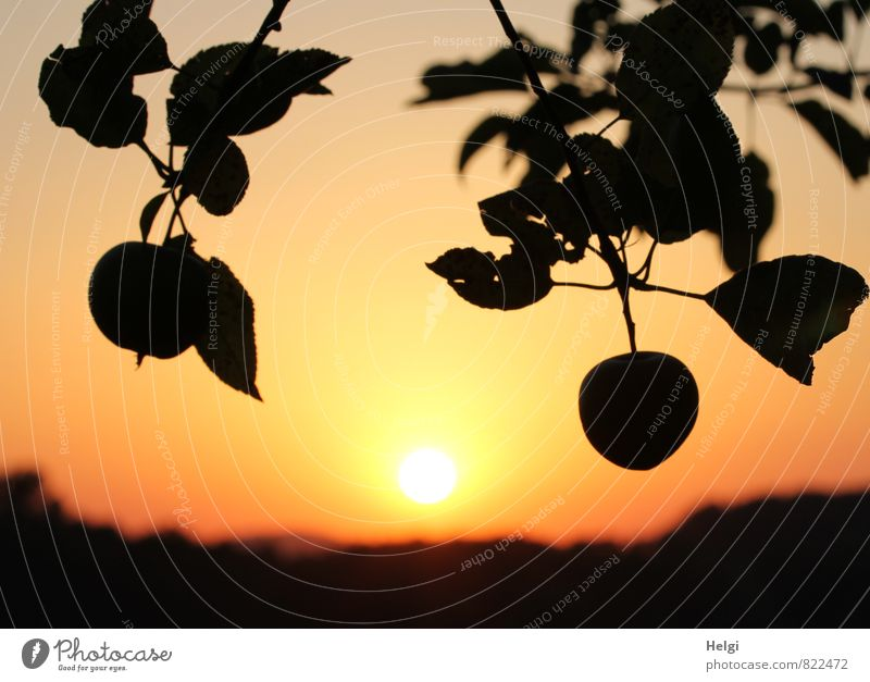 Sky Nature Plant Summer Sun Tree Calm Leaf Landscape Black Environment Yellow Natural Exceptional Moody Food