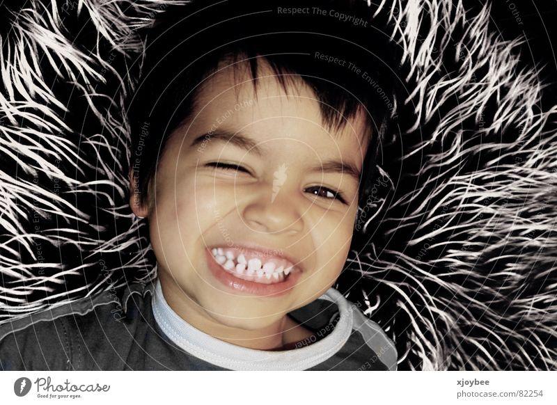 Child Joy Boy (child) Laughter Pelt Grinning Toddler