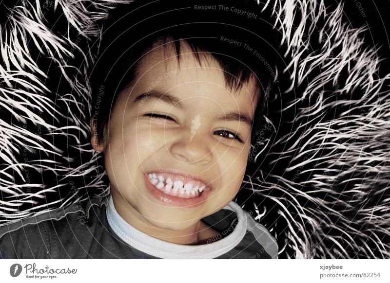 Little boy Pelt Child Toddler Boy (child) Joy Laughter Grinning young