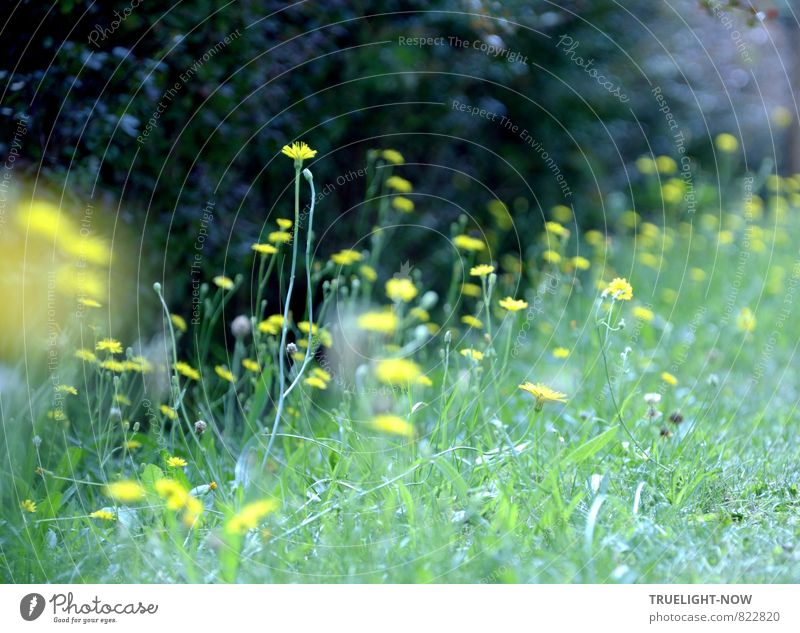Nature Plant Beautiful Green Summer Flower Landscape Black Yellow Life Meadow Grass Funny Natural Small Happy