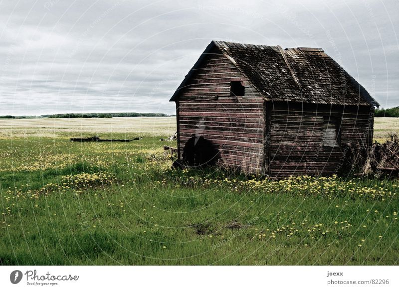 outpost Danger of collapse Manitoba Decompose Meadow Field Wood Decline Farm Roof Transience Gray Canada Window Agriculture Loneliness Resign Green space Clouds