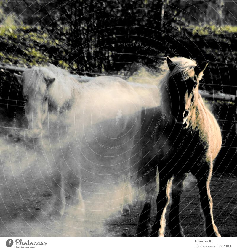 fauna and flora Cloud of dust Horse Mane Animal Draft animal Dust Mammal Farm animal Looking into the camera Stand Pair of animals 2 Exterior shot Curiosity