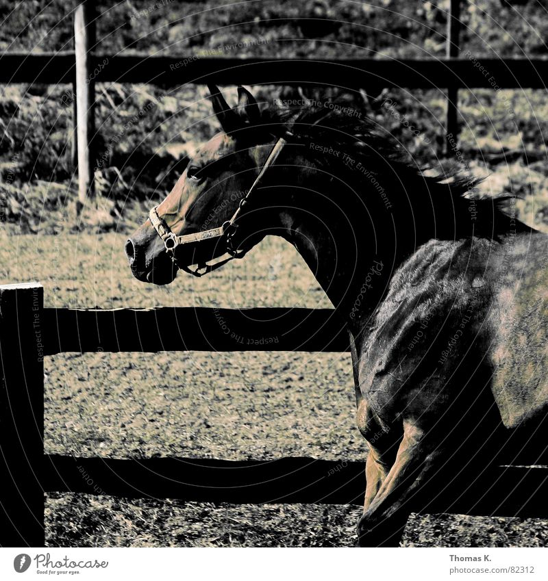 Animal Walking Horse Pelt Fence Patch Mammal Partially visible Section of image Dappled Horse's gait Fold Mane Farm animal Fenced in Draft animal