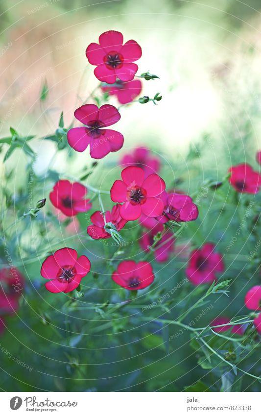 Nature Plant Beautiful Flower Environment Meadow Grass Blossom Natural Garden Esthetic
