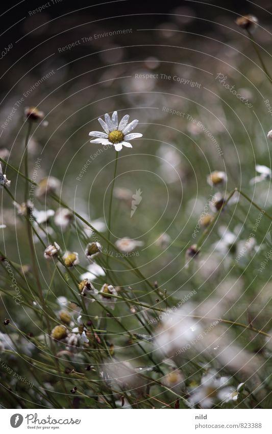 Nature Plant Beautiful Green White Summer Flower Calm Environment Meadow Natural Garden Brown Park Rain Weather
