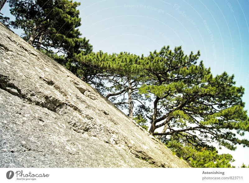 Sky Nature Blue Plant Green White Summer Tree Environment Mountain Warmth Gray Above Rock Air Weather