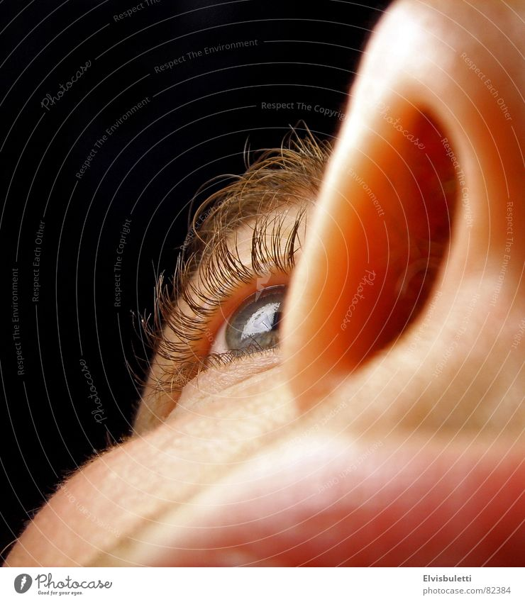 nasal eye Nostril Cheek Near Macro (Extreme close-up) Close-up winper Eyes Nose Lips Face Eyelash