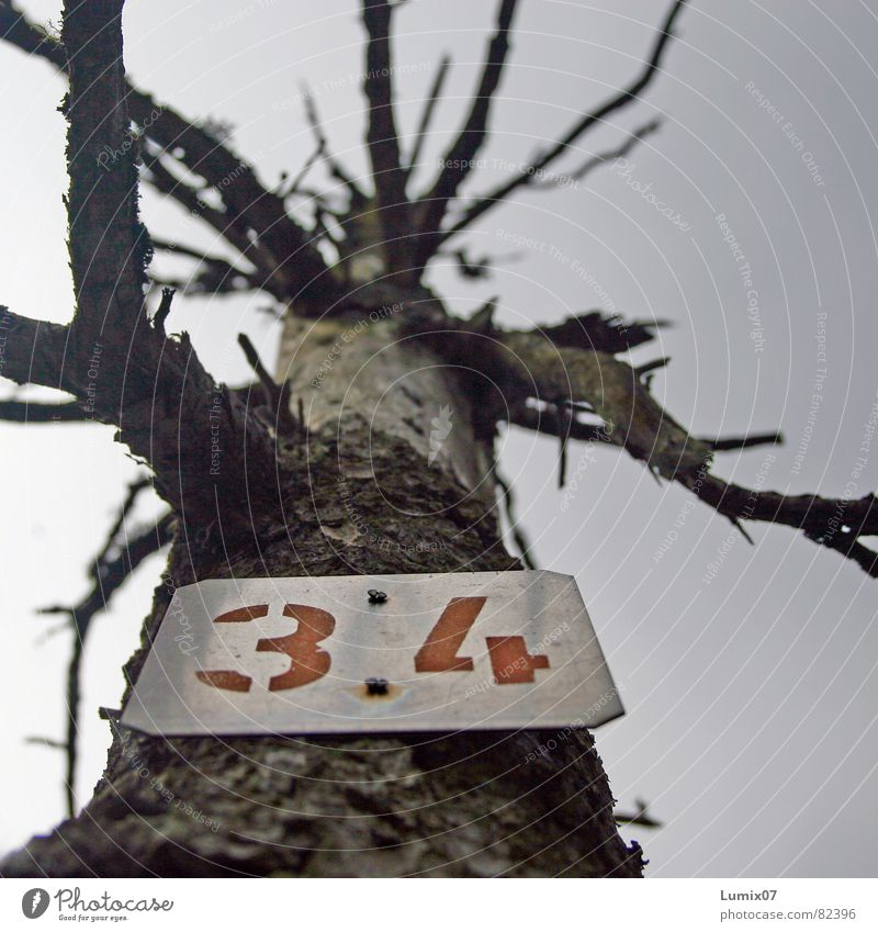 OPFER 34 Environmental pollution Tree Forest death Environmental protection Death Skeleton Digits and numbers no sheets Nature