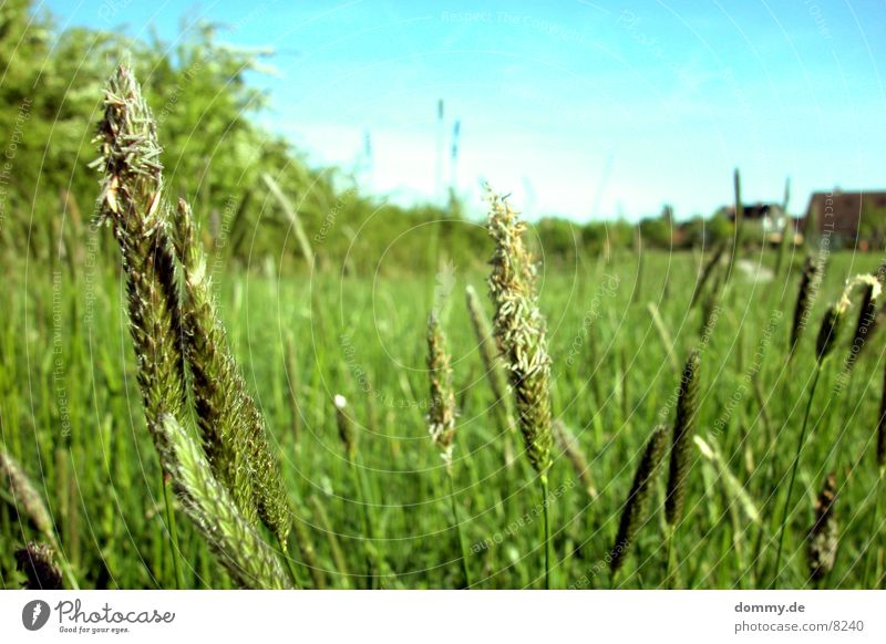 Nature Green Grass Field Free To go for a walk Grain