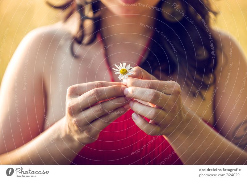 Human being Woman Nature Relaxation Hand Flower Adults Emotions Feminine Natural Freedom Contentment Esthetic Fingers Touch Transience