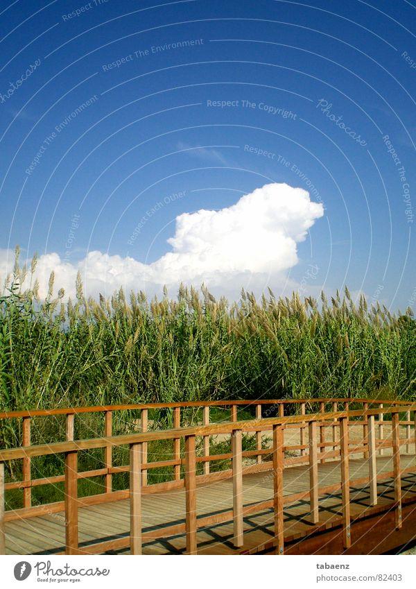 Nature Sky Vacation & Travel Clouds Garden Park Bridge Leisure and hobbies Spain Beautiful weather