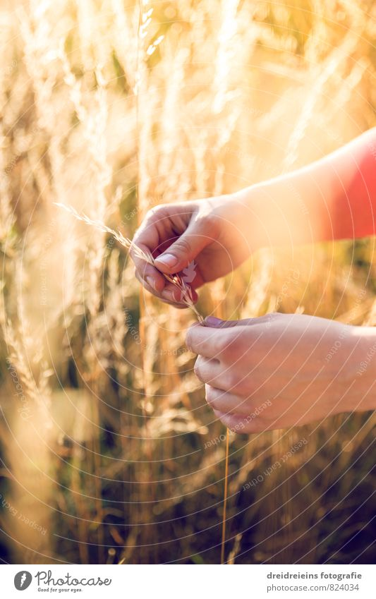 feel the summer Hand Nature Sunlight Summer Beautiful weather Field Touch Free Natural Positive Retro Warmth Yellow Orange Emotions Moody Contentment Grateful