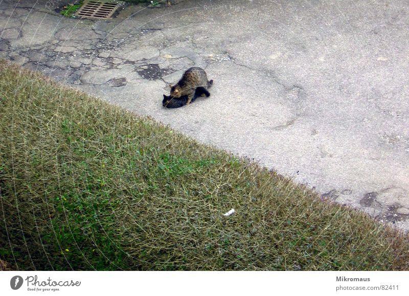 Cat Joy Animal Street Speed Mammal Domestic cat Courtyard Cuddling Hedge Affection Spring fever