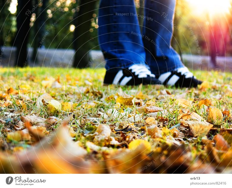 Leaf Loneliness Autumn Dream Feet To go for a walk Sneakers