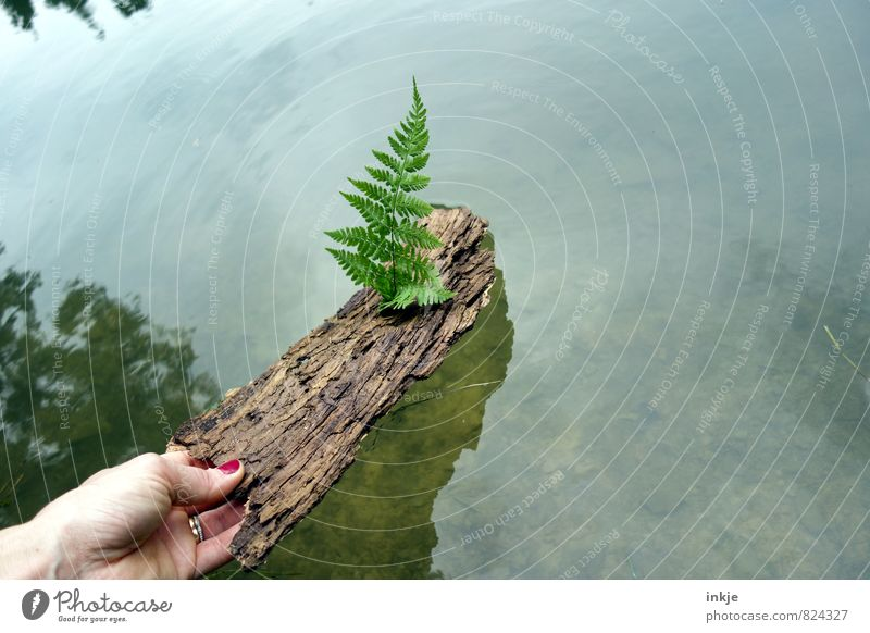 Nature Vacation & Travel Water Summer Hand Leaf Joy Environment Emotions Spring Playing Natural Wood Swimming & Bathing Lake Leisure and hobbies