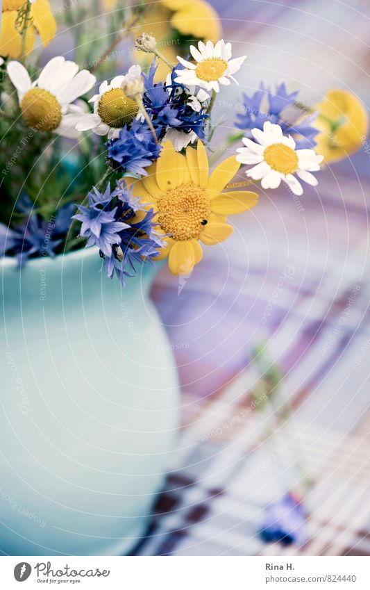 Blue Summer Flower Yellow Blossoming Checkered Tablecloth Vase Cornflower Chamomile
