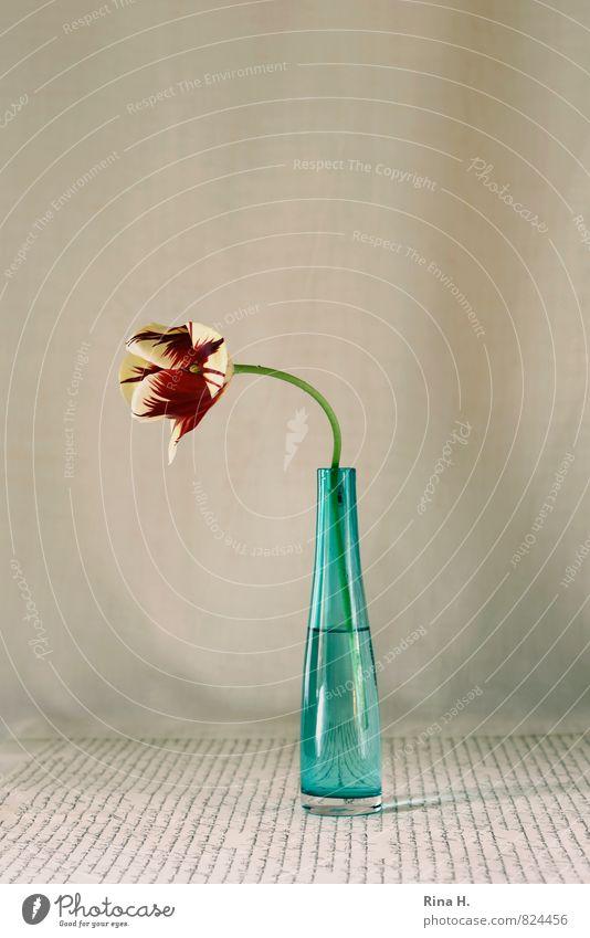 Flower Blossoming Typography Still Life Tulip Vase