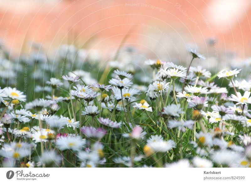 summer meadow Healthy Garden Environment Nature Plant Spring Summer Beautiful weather Flower Grass Daisy Park Meadow Experience Flower meadow Colour