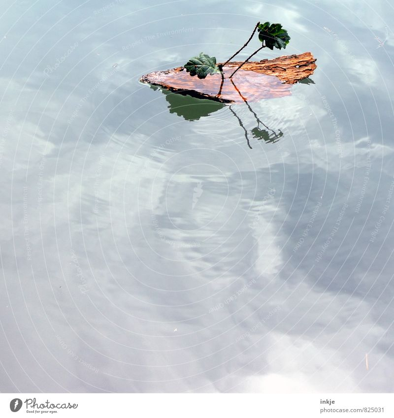 Sky Nature Vacation & Travel Water Summer Leaf Spring Playing Natural Wood Swimming & Bathing Lake Air Leisure and hobbies Trip Beautiful weather