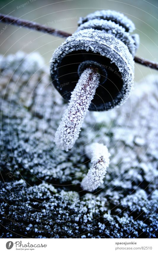 freezing cold Wooden stake Wire Pasture fence Cold Hoar frost Meadow Fresh Cattle Pasture Ice Green space Winter ring insulator Crystal structure Frost chill