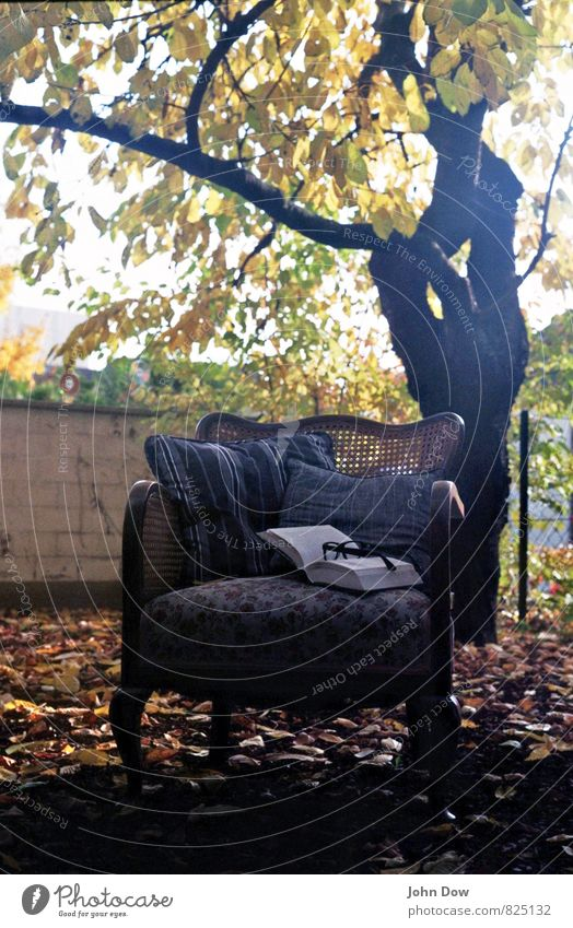 Mon Repos Leisure and hobbies Reading Sunrise Sunset Autumn Plant Tree Bushes Leaf Think Cuddly Warm-heartedness Armchair Garden Ancient Antique Comfortable