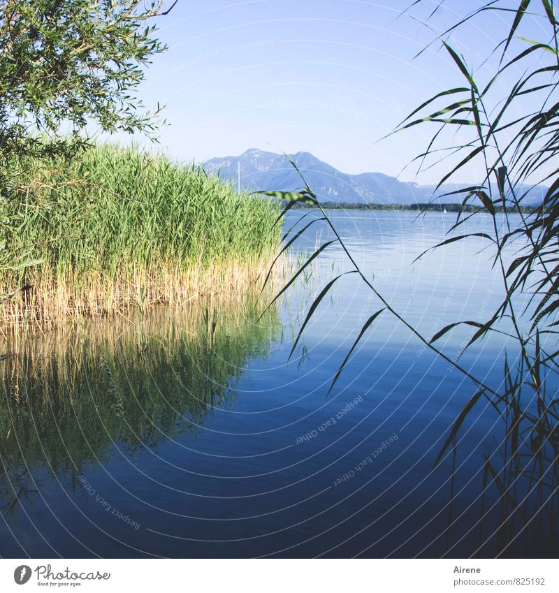 300 - Looking at new challenges Landscape Water Sky Summer Common Reed Mountain Alps Pre-alpes Coast Lakeside Bay Island Herrenchiemsee Castle Lake Chiemsee