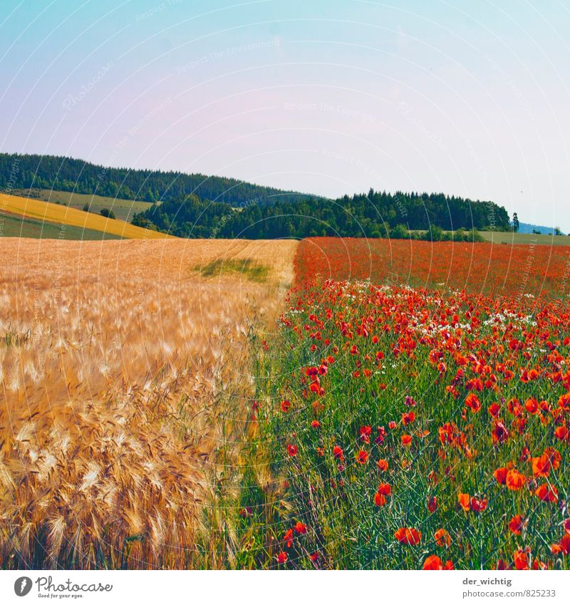 Corn meets poppy seed Trip Far-off places Summer Sun Mountain Hiking Working in the fields Field Agriculture Forestry Environment Nature Landscape Plant Weather