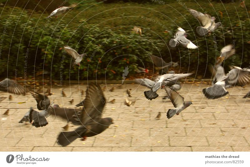 Green Animal Air Park Bird Beginning Speed Multiple Aviation Bushes Wing Many Tile Store premises Sidewalk Airport