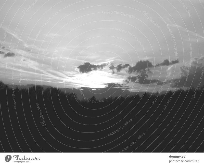 Evening mood B/W Forest Sunset Black White Americas Black & white photo