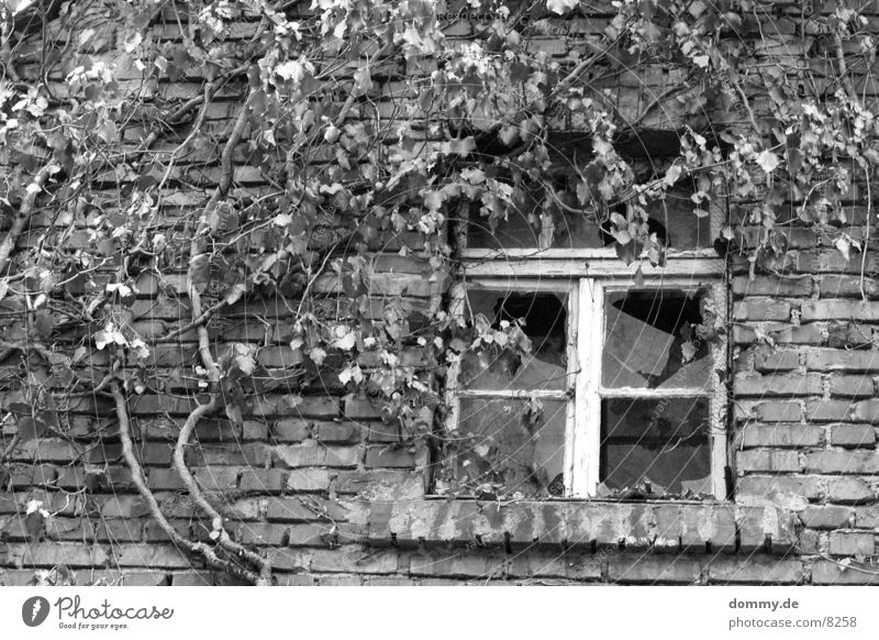 former Broken Window Building Black White Architecture Old swallow Black & white photo