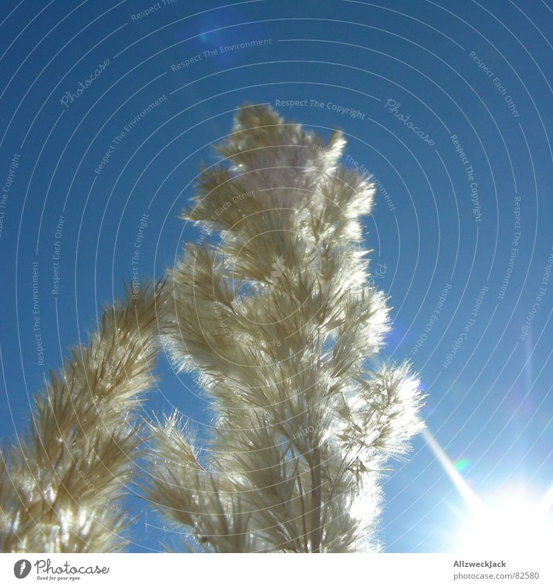 Sky Sun Blue Summer Winter Cold Grass Warmth Bright Frost Physics Clarity Hot Dry Beautiful weather Dazzle