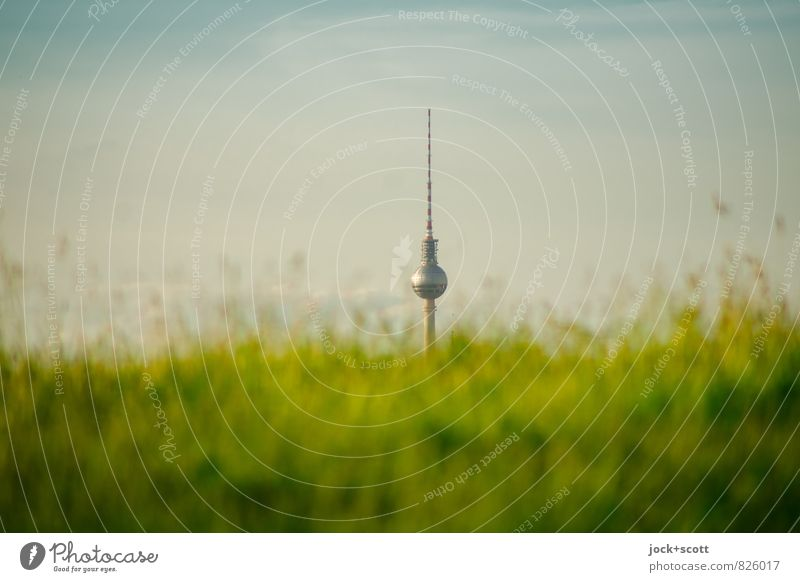 natural selection Harmonious Relaxation Sightseeing City trip Breed Garden Cloudless sky Spring Grass Meadow Capital city Downtown Tower Berlin TV Tower Growth