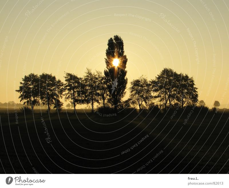 Nature Sun Tree Calm Autumn Field Idyll Stars Star (Symbol) Romance To go for a walk Kitsch Home country Celestial bodies and the universe Lower Saxony Clump of trees