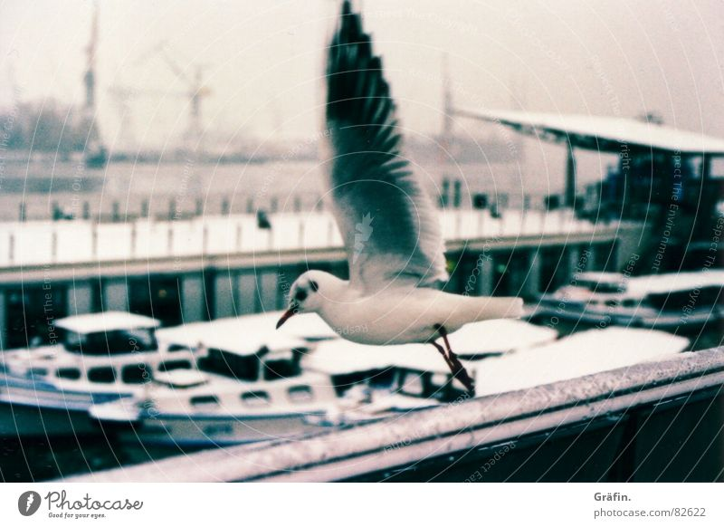 departure Seagull Xpro Watercraft Jetty Bird Departure Beak Lomography Black-headed gull  Harbour Hamburg Ice Snow cross Flying Feather Trip