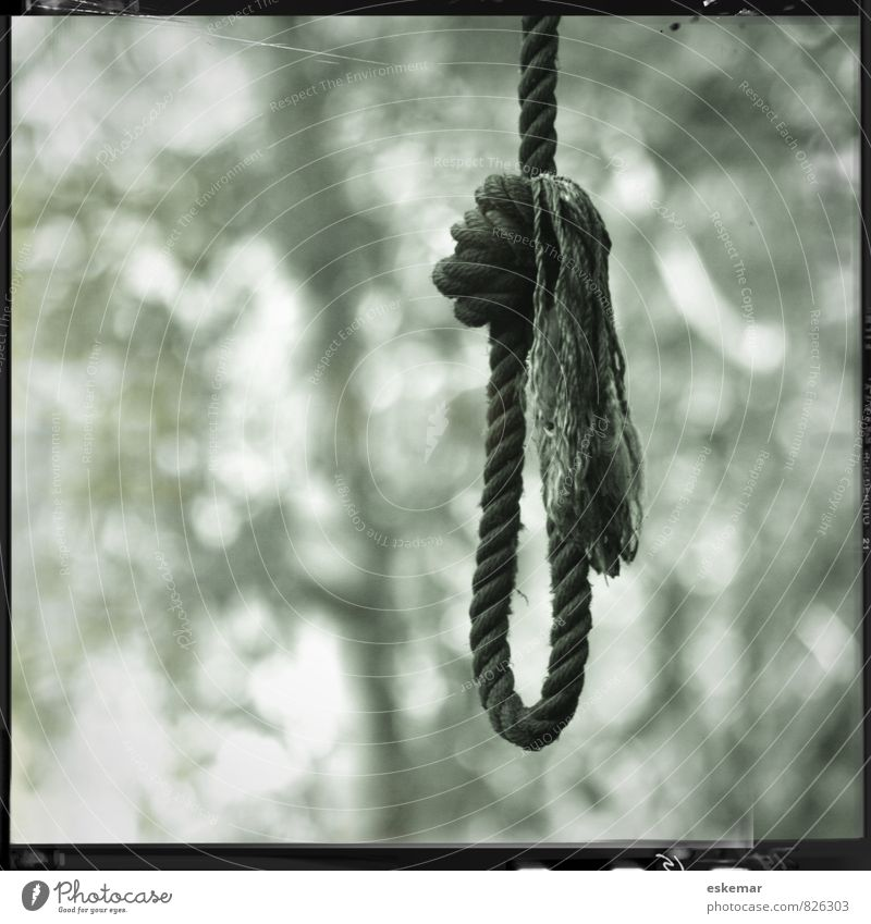 rope Rope noose Loop Tree Forest Knot Sadness Authentic Retro Black White Emotions Death Distress Square edge framed Gallows Suicide Hanging Black & white photo