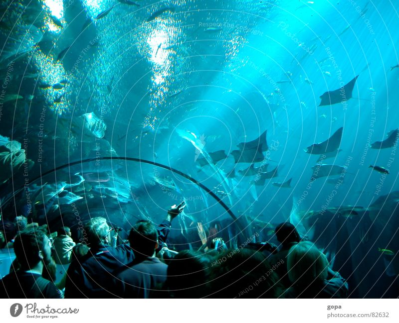 Under & Over Aquarium Ocean Fascinating Waterway Underwater photo Attractive Leisure and hobbies Fish underwater panorama Blue Reflection subsea
