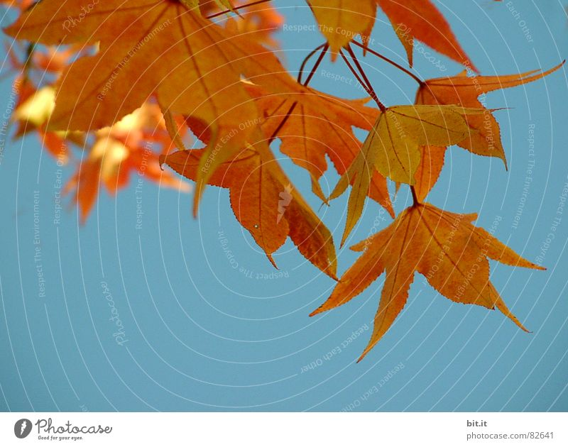 Sky Nature Tree Plant Autumn Environment Landscape Air Park Orange Gold Climate Beautiful weather Autumn leaves Maple tree October