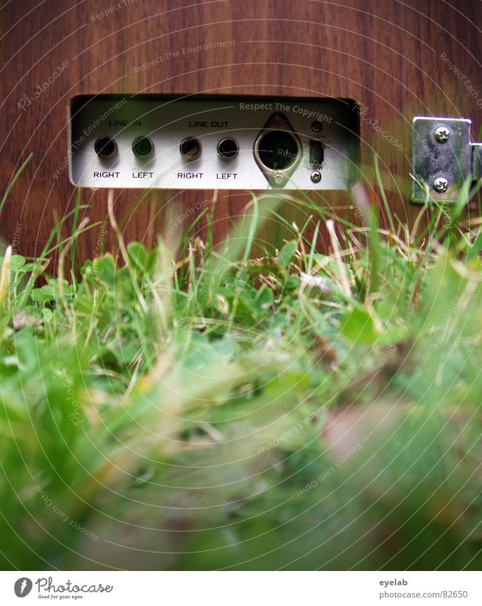 Green Joy Summer Wood Garden Grass Music Feasts & Celebrations Cable Technology Lawn Stop Mask Listening Media Concert