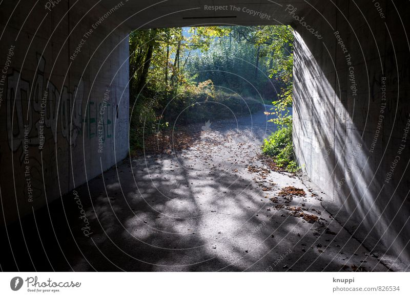 ...at the end of the tunnel. Art Artist Work of art Graffiti Summer Wild plant Park Forest Hill Cool (slang) Free Hip & trendy Uniqueness Modern Town Gold Gray
