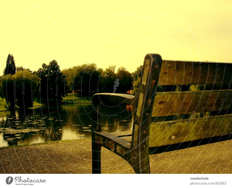 Sky Nature Water Vacation & Travel Beautiful Tree Loneliness Relaxation Yellow Sadness Lake Park Sit Wait Large Esthetic