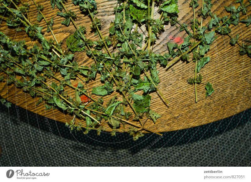 Melissa officinalis, flashed Balm Lemon Balm Medicinal plant Herbs and spices Medication Alternative medicine Tea Tea plants Herb tea Harvest Leaf Stalk Dry