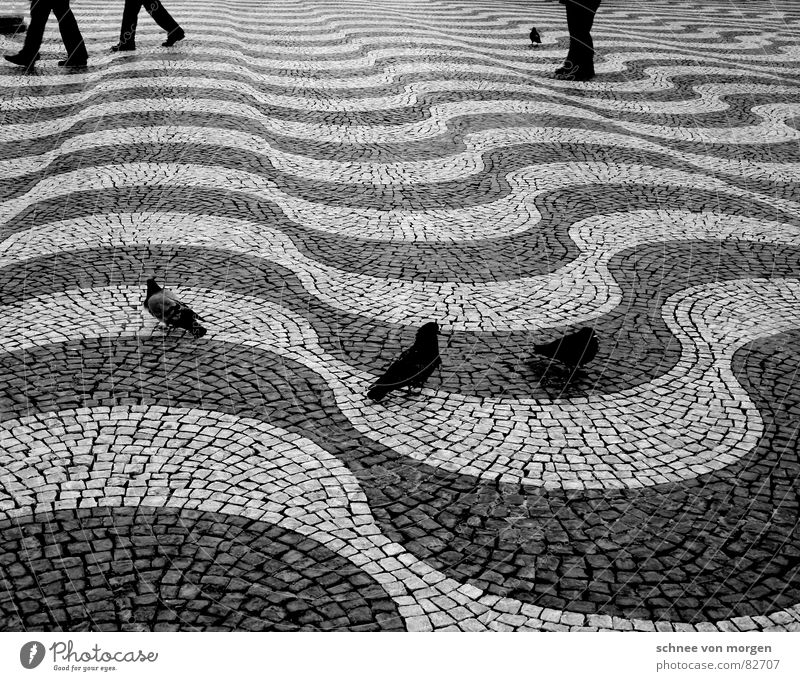 Haste with time Floor covering Pigeon Black Waves Calm Going Stand Asphalt Pavement Bird Human being Black & white photo leg pairs Flying Walking Legs Speed