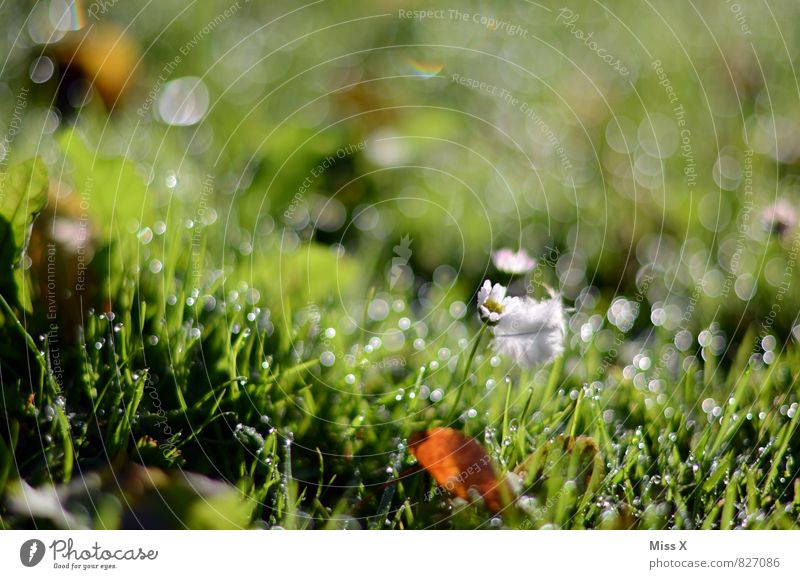 Nature Green Environment Meadow Grass Moody Weather Rain Growth Fresh Drops of water Wet Beginning Blade of grass Dew