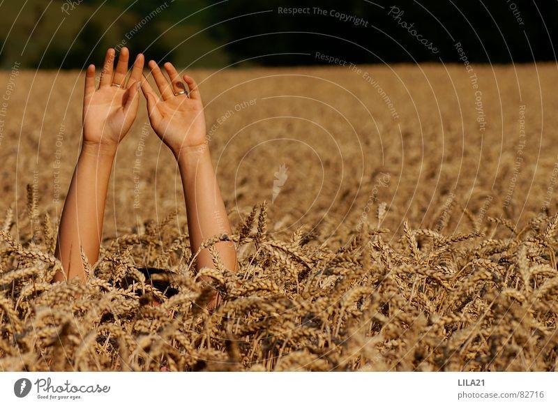 Hand Field Arm Fingers Grief Distress Grain Cornfield Cry for help Wheat Wave Needy Drown Seeking help