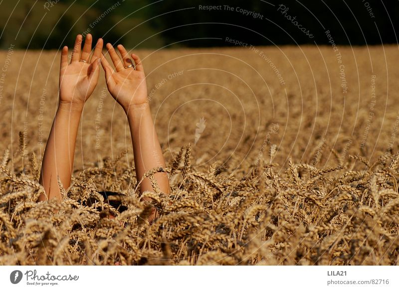 Help Hand Cornfield Wheat Field Fingers Drown Wave Grief Distress beg for help Arm Grain Needy Cry for help Seeking help